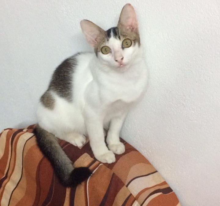 Apa Dosa Kucing Ini?