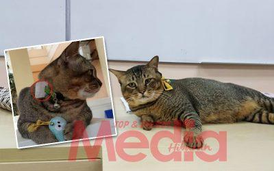 Kucing Pun Ada Kad Matrik, Ikuti Kuliah Di UIA