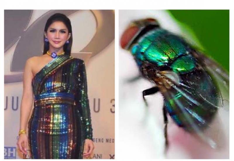 Gaun AJL32 Disamakan Dengan Lalat Hijau, Sajat Kata Pemikiran Mereka Sangat Eksotik Dan Tak Boleh Nak Sekat Fantasi Orang!